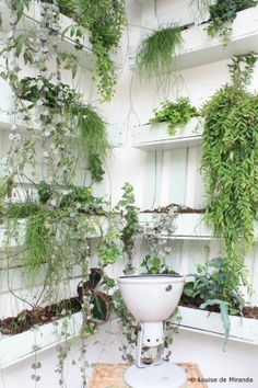 Hanging indoor garden.