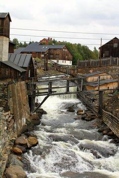 Roros, Norway, from resurrection fern