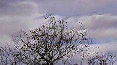 Desde las Islas Canarias  ..Fotografias  : El cielo pude esperar....Nublado...Maspalomas... G...