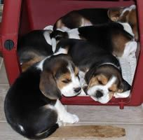No room in the Beagle Inn!