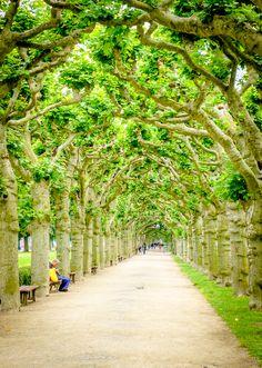 http://www.meaningfultraveler.com/wp/wp-content/uploads/2013/09/Plane-Trees-Frankfurt.jpg