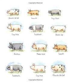 All Pigs Are Beautiful: Amazon.co.uk: Dick King-Smith, Anita Jeram: Books