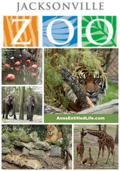 The Jacksonville Zoo; Photographs of the animals at the Jacksonville Zoo, as well as my review of my day at the Jacksonville Zoo and Gardens. http://www.annsentitledlife.com/florida/the-jacksonville-zoo/