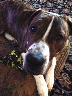 Monday Mischief #61: Death By Dog!