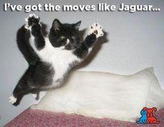 lol moves like Jaguar!