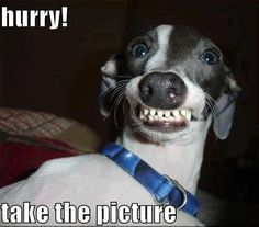 Phteven wants you to hurry up and take the photo! Lol
