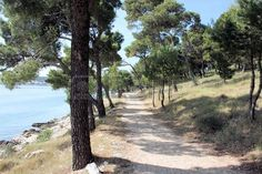 Pathway with trees in Rogoznica, Croatia