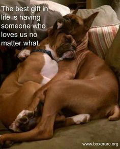 """Determine more details on """"boxer dogs"""". Have a look at our internet site. Boxer Dogs Facts, Boxer Puppies, Dog Facts, Dogs And Puppies, Doggies, Boxer Dog Quotes, Boxer Memes, Funny Boxer Dogs, Boxer Breed"""