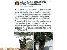 Perros perdidos  España  Madrid  Guadarrama March 01 2018 at 06:06AM   ver foto  #PERDIDO #ENCONTRADO  Contacto y Info: https://leales.org/perdidos-o-encontrados/perros-perdidos/ver-foto_i3524 #Difunde en #LealesOrg un #adopta y sé #acogida para #AdoptaNoCompres O un #SeBusca de #perro o #gatos ℹ En todos los navegadores: Leales.org y en todas las redes sociales: @lealesorg   Acerca de esta publicación:  Esta publicación NO ha sido creada por Leales.org y NO somos responsables de su…