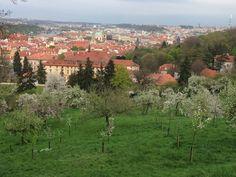Prague you gorgeous city 8/4/14