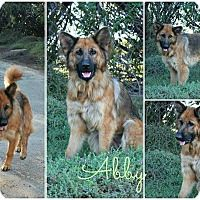 German Shepherd Dog Dog for adoption in Fallbrook, California - Abby