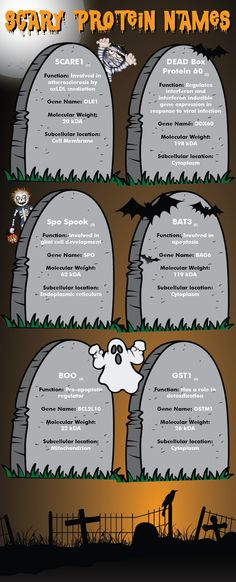 Check out some of the spooky protein names as we approach Halloween in our Scary Protein Name Infographic. Learn about their function, gene name, molecular weight and subcellular location. Featured proteins in this infographic include: SCARE1, DEAD Box Protein 60, Spo Spook, BAT3, BOO and GST. Happy Halloween! #antibodies