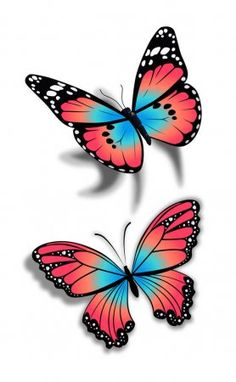 illustration of a two beautiful butterfly on isolated white background , Colorful Butterfly Tattoo, Butterfly Clip Art, Butterfly Drawing, Butterfly Painting, Butterfly Wallpaper, Blue Butterfly, Butterfly Wings, Butterfly Images, Butterfly Coloring Page