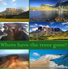 Wayki Wayki Blog: Flat Earth has no Forests - human amnesia is lifting