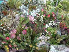 Fynbos biome - Cape of Agulhas - Google Search