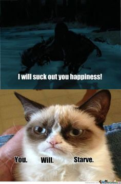 100 Harry Potter Memes That Will Always Make You Laugh - Grumpy Cat - Ideas of Grumpy Cat - 100 Harry Potter Memes That Will Always Make You Laugh The post 100 Harry Potter Memes That Will Always Make You Laugh appeared first on Cat Gig. Images Harry Potter, Harry Potter Jokes, Harry Potter Fandom, Always Harry Potter, Harry Potter Stuff, Making Of Harry Potter, Dobby Harry Potter, Meme Comics, Pokemon Comics