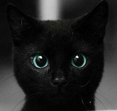 those eyes