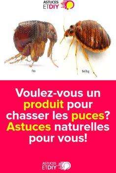 Voulez-vous un produit pour chasser les puces? Astuces naturelles pour vous! Bee, Dessert, Fleas, I Want You, Products, Bricolage, Desserts, Deserts