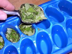 Freezing herbs in ice trays with a little water is a useful method for storing herbs that are prone to lose their flavour upon drying. — with Jeannine Maria Pocean and Sherry Venger. via Green Renaissance FB Freezing Fresh Herbs, Freeze Herbs, Vegetarian Cookies, Freezer Cooking, Cooking Oil, Growing Herbs, Canning Recipes, Canning Tips, Preserving Food