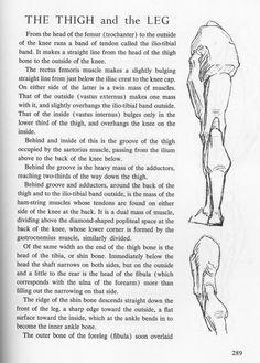 9 Best Bridgman Torso Drawings Images Anatomy Drawing Life