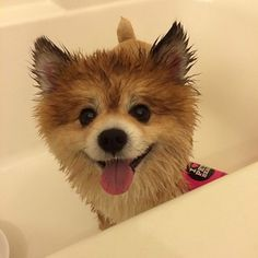 36 Painfully Adorable Pictures Of Puppies At Bathtime