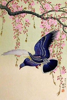 cherry blossoms & pigeon by Ohara Koson
