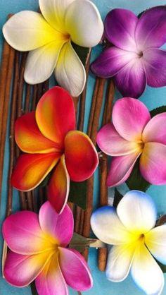 Ideas screen savers iphone art for 2019 Flower Wallpaper, Cool Wallpaper, Iphone Wallpaper, Iphone Backgrounds, Nature Wallpaper, Garden Pictures, Flower Pictures, Folk Art Flowers, Paper Flowers