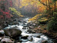 Great Smoky Mountains National Park, TN. - US 441, Newfound Gap Road that bridges Gatlinburg, TN to Cherokee, NC