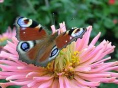 Charming Butterfly