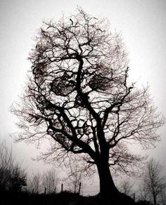 Skull tree...cool tattoo idea