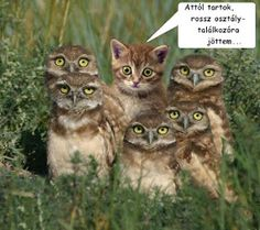 Funny animal pictures with an assortment of animals. Funny animal pictures with captions. Baby Animals, Funny Animals, Cute Animals, Baby Owls, Animals Images, Cute Kittens, Cats And Kittens, Cats Bus, Silly Cats