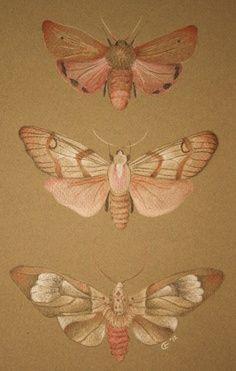 moths, pretty self-explanatory