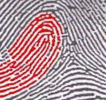 About fingerprint patterns