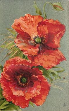 two widely open poppies, unopened bud above... 1907, one in a series of 6 vintage poppy postcards