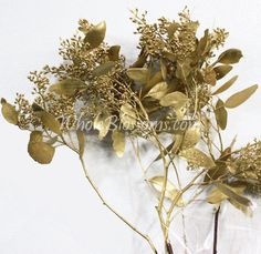 Gold Seeded Eucalyptus