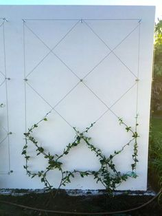 Use eye bolts and wire to create a wall mounted trellis for your climbing plants. Use eye bolts and wire to create a wall mounted trellis for your climbing plants. Adds ambiance and Vegetable Garden Design, Diy Garden, Garden Trellis, Garden Care, Balcony Garden, Garden Projects, Wire Trellis, Garden Vine Ideas, Small Garden Decoration Ideas