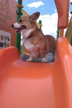 CORGI FRIDAY!