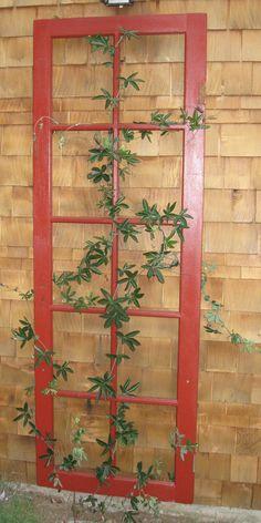 TRELLISES! - Use a group of old windows w/o panes