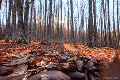 En algunos lugares del mundo se puede sentir, respirar y ver el Otoño. Ayer estuve en uno de ellos, un bosque de Castaños. La excursión fue bastante curiosa e inesperada, empezando porque creíamos ...