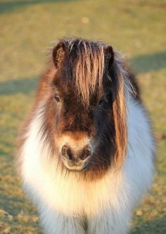 Fuzzy wuzzy was a...horse of course!