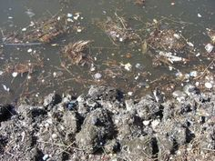 ocean pollution facts the ocean remains one of the most expansive  essay on soil pollution causes effects and solutions of land pollution conserve energy