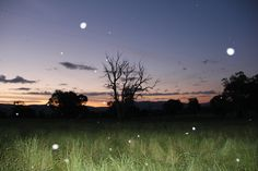 Corryong, magic place Magic, Celestial, Spaces, Sunset, Outdoor, Sunsets, Outdoors, The Great Outdoors, The Sunset