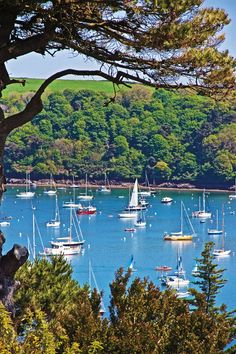 St Mawes Harbour, Cornwall. Photo: Matthew Buck #harbours #sea #UK