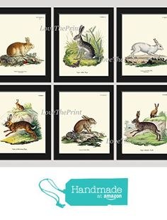 Bunny Rabbit Art Print SET of 6 Beautiful Antique Cute White Gray Brown Animal Baby Pet Nature Natural Science Illustration Room Wall Home Interior Decor to Frame Unframed GNT https://www.amazon.com/dp/B0725ZGXX1/ref=hnd_sw_r_pi_dp_0XfkzbMSS0MKF #handmadeatamazon