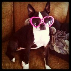 64 Perfect Photos Of Dogs Wearing Sunglasses, because- well, why not?