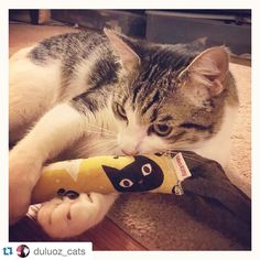 "Abel demonstrates the ""snuggle and hug"" play technique w/ his organic catnip kicker! Whatta sweetie!!! #misohandmade #misohandmadekitty #sevenislandsfabric #catniptoy #etsyshop  #Abel loves his new kick toy! Thanks @misohandmade (and @mike3k for posting about their great toys!) #catsofsf #catsofinstagram"