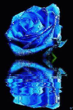 Sparkling Blue Rose Reflection