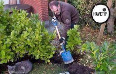 Weed, Outdoor Power Equipment, Planters, Marijuana Plants, Plant, Window Boxes, Garden Tools, Pot Holders, Flower Planters