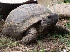 TPG Petition Tortoise FAQ Slide show - Tortoise Protection Group