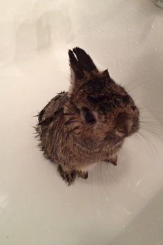 """My bunny got his first bath last night."""